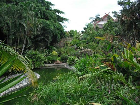 Pinnacle Grand Jomtien Resort: Tropischer Garten mit Goldfischteich