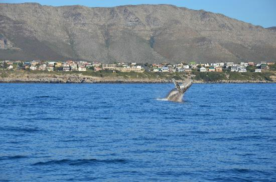 Penguino Guesthouse: Whale watching tour