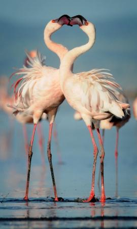 Ngare Sero - Lake Natron Camp: Flamingoes.