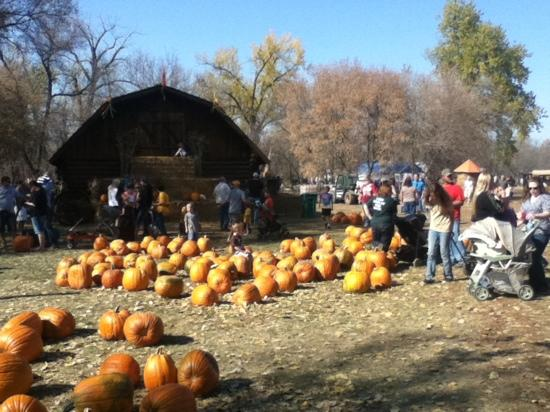 Papa's Pumpkin Patch: great time!