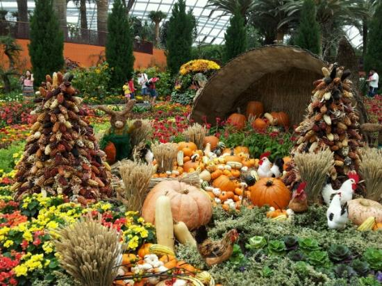 gardens by the bay flower dome seasonal floral display halloween