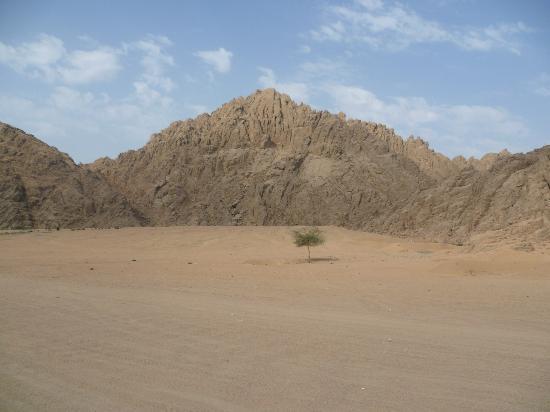 Ktm Egypt Calling Dakar Adventure Tours : Sinai plus Acacia tree