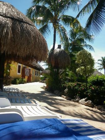 Iberostar Tucan Hotel: Poolside