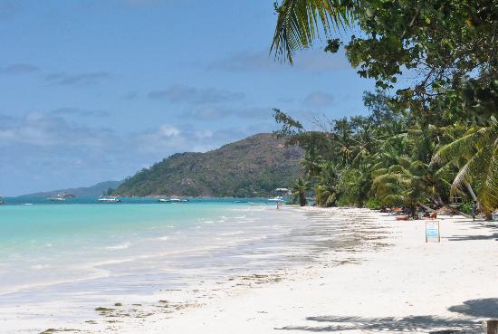 Paradise Sun : spiaggia dell'hotel