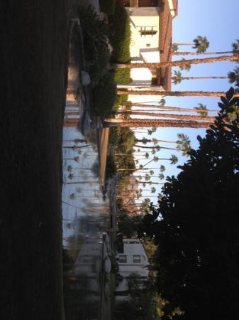 Omni Rancho Las Palmas Resort & Spa: lots of palm trees