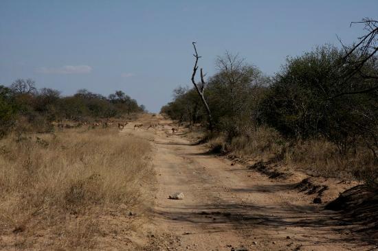 Skukuza Rest Camp: Kruger
