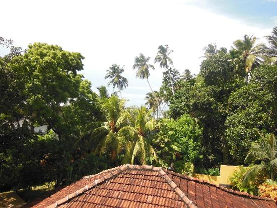 Black Beauty Guesthouse: View from the balcony