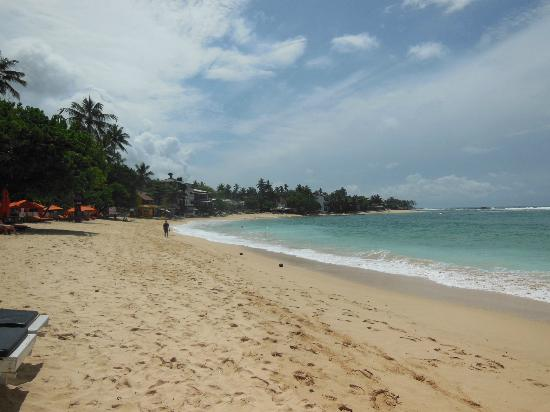 Black Beauty Guesthouse: Amazing Unawatuna Beach!!!!