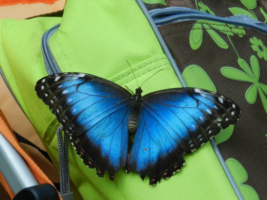 Bussolengo, Italia: Farfalla Blu