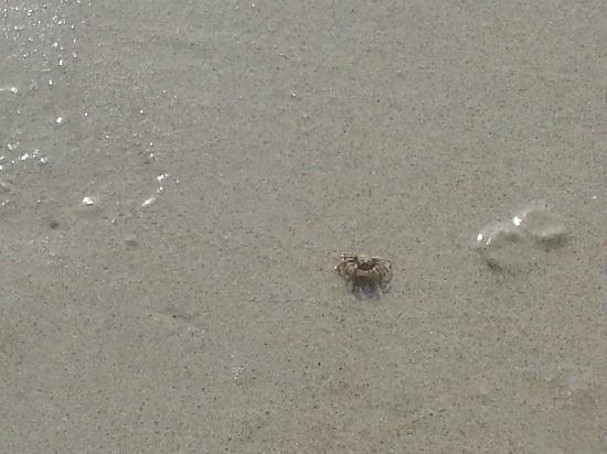 บียอน รีสอร์ท กระบี่: A Krabi Crab