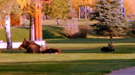 Rivera Lodge: Moose in the city park