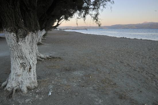 The Kalloni Bay Hotel: The beach in front of the hotel