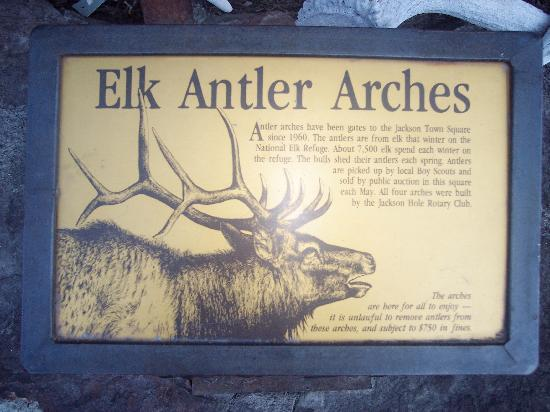 The Lexington at Jackson Hole: Elk Antler Arch information