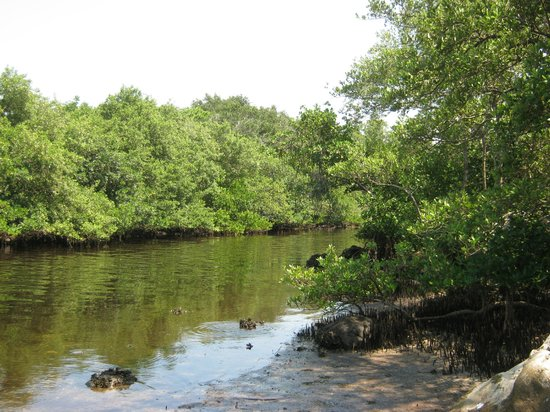 Holiday, FL: Rocky Creek trail