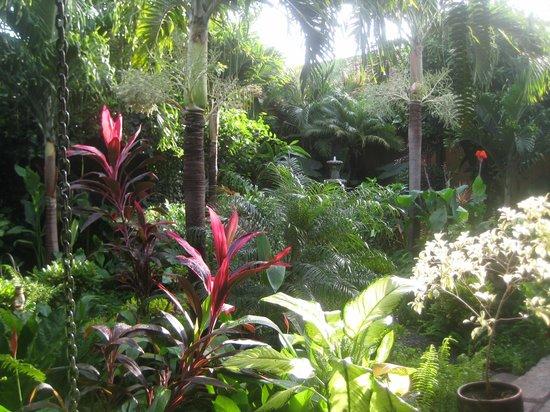 The Garden Cafe: Our Garden