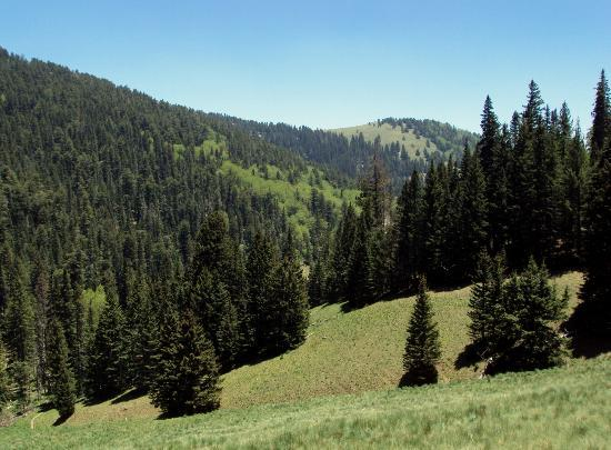 Ruidoso, Nuovo Messico: hiking near Ski Apache