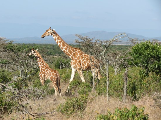 Ol Pejeta Bush Camp: View from truck