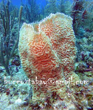 Buceo Xtabay: Esponja naranja