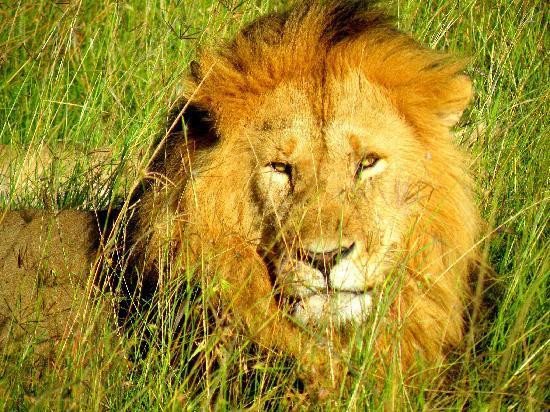 In2kenya: il re della savana