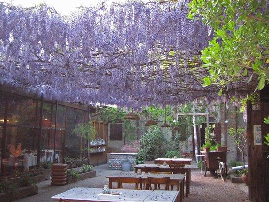 Truccazzano, إيطاليا: la fioritura del glicine