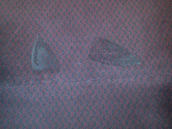 Country Hearth Inn Athens: Clothing iron scorch marks all over the carpet