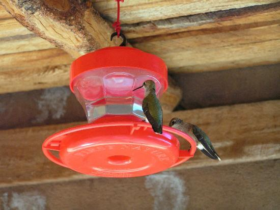 Casitas de Gila Guesthouses: Hummingbirds