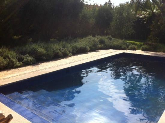 "Jnane Tamsna: ""Secret Garden"" pool surrounded by rosemary and lavender."