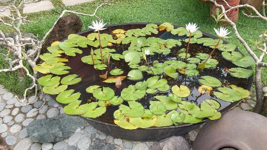 Dasmarinas City, Filipinas: Lily Pad
