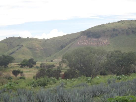 Matices Hotel de Barricas: вид на горы с брендом текилы