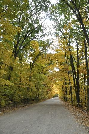 Kettle Moraine State Forest: tree covered route