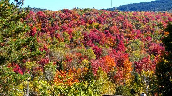 Motel Long Lake and Cottages: Fall Foliage