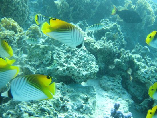 Sofitel Bora Bora Marara Beach Resort : モツの方の魚