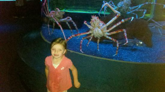 King Crabs Picture Of Ripley 39 S Aquarium Of The Smokies