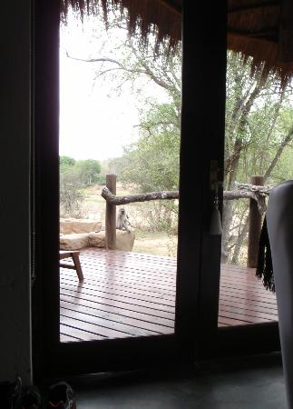 Pondoro Game Lodge: There's a monkey on the spa!