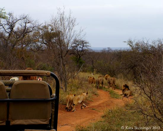 Pondoro Game Lodge: Traffic jam, Africa style