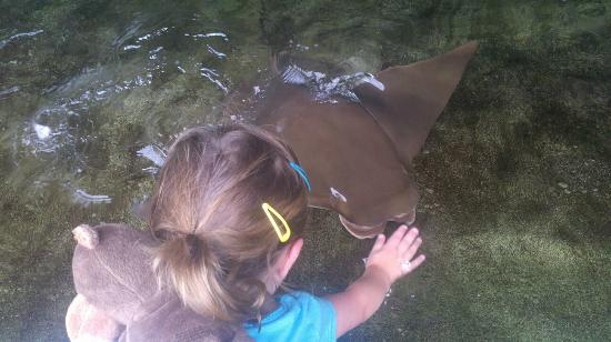 Tampa's Lowry Park Zoo: Petting the stingrays