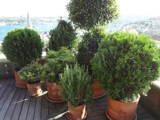 Witt Istanbul Suites: Terrace Plants