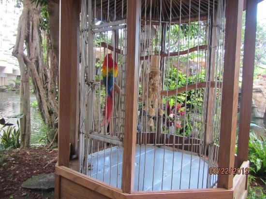 The Westin Maui Resort & Spa : Wild life