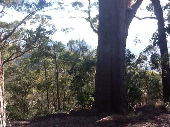 Binna Burra Mountain Lodge: Trees and view from sitting area outside dining room