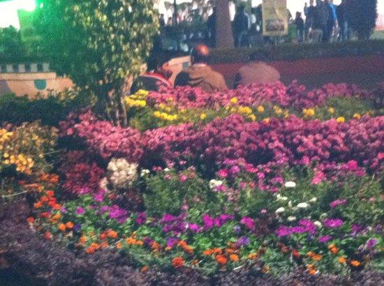 Gandhi Udyan Park
