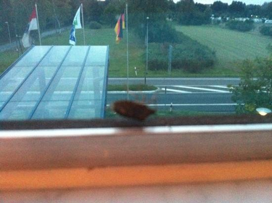 Holiday Inn Express Frankfurt-Airport: cockroach