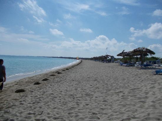 Melia Cayo Santa Maria: Beach