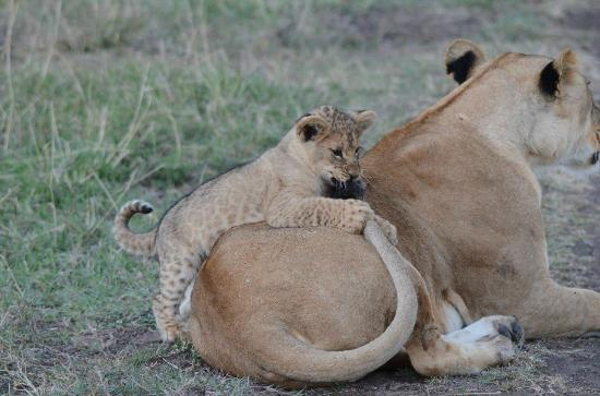 Ol Pejeta Bush Camp: that's what this is for
