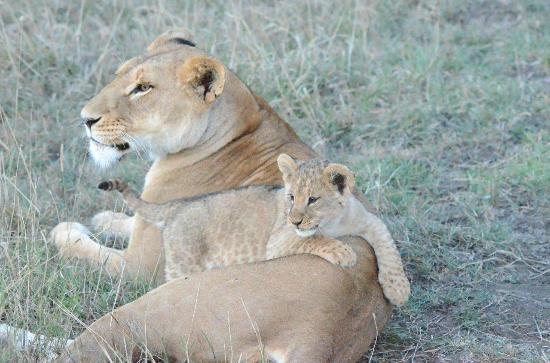 Ol Pejeta Bush Camp: takehome size
