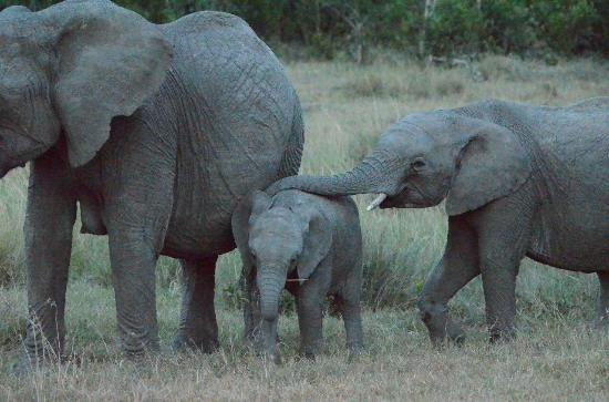 Ol Pejeta Bush Camp, Asilia Africa: family love