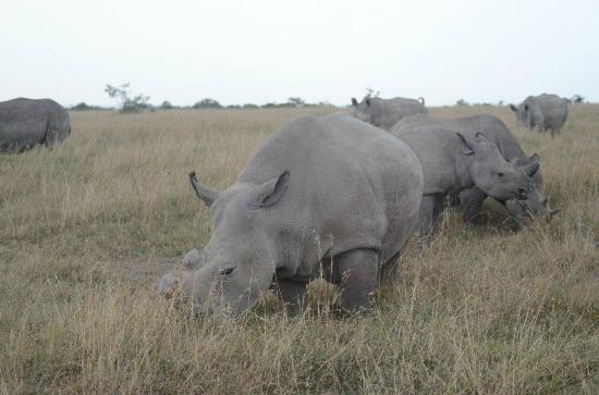 Ol Pejeta Bush Camp, Asilia Africa: all 3 rhino species