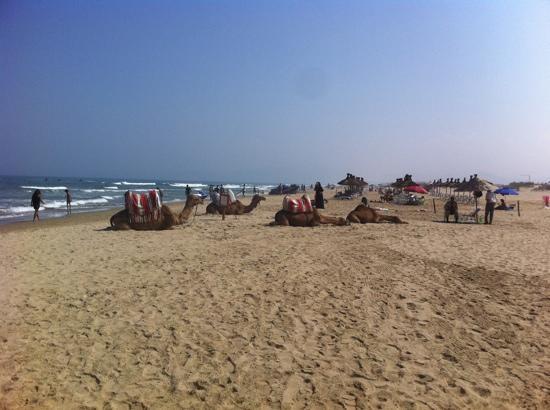 Club Med Yasmina: à droite de la plage
