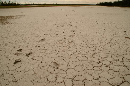 Wood Buffalo National Park: 乾いているSalt Plains