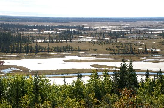 Wood Buffalo National Park: 雨の翌日のSalt Plains