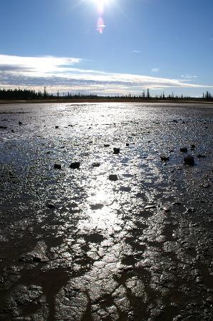 Wood Buffalo National Park: 雨の翌日のSalt Plains